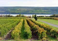 Visiting Finger Lakes Wine Country