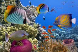 Sea life at Florida Aquarium