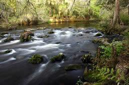 Hiking the Hillsborough River State Park