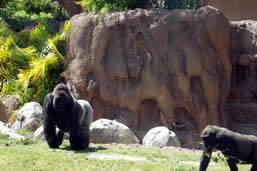 Visit LA Zoo