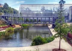 Visiting the Myriad Botanical Gardens