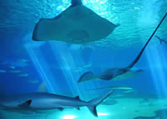 Visiting Ripley's Aquarium