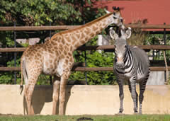 Visit Busch Gardens in Tampa