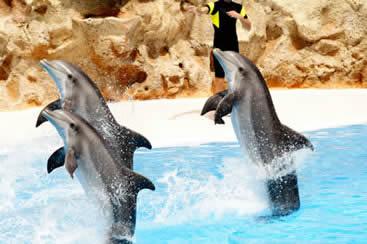 Oceanarium theme parks