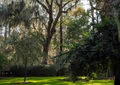 Bog Garden in Greensboro